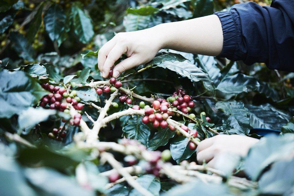 cafés bangkok roots