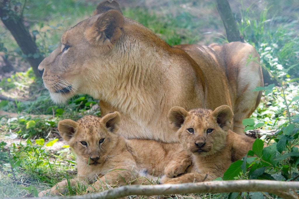 visiter yvelines zoo thoiry